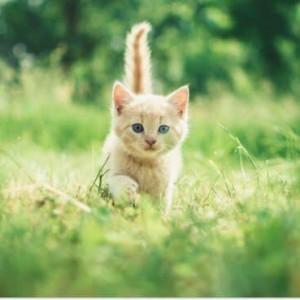 Jenny + art + cat = ?